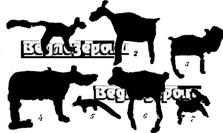 Табл. 1. Петроглифы 1—волк, 2 — олень, 3 — неизвестное животное, 4 — медведь, 5 — лиса, 6 - неизвестное животное, 7— заяц.