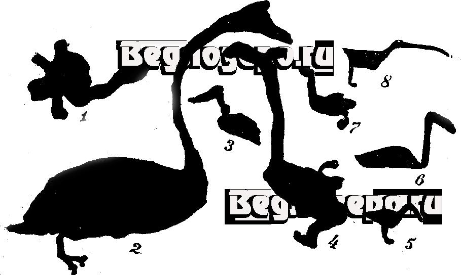 Петроглифы. Дичь. 1—токующий глухарь, 2—лебедь, 3—утка, 4—гусь, 5—лесная дичь, 6—гагара, 7—куропатка, 8—вальдшнеп.