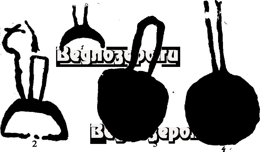 Петроглифы. Изображения капканов на скалах Карелии
