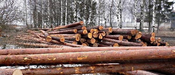 IKEA вырубает леса Карелии