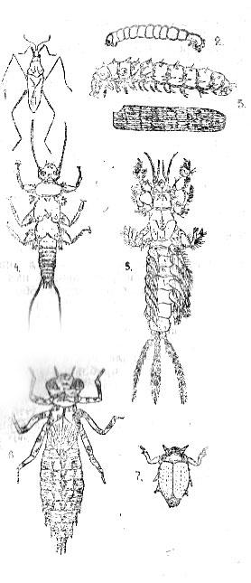 Водные насекомые озер Карелии