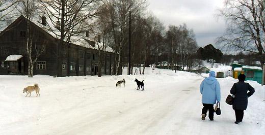 Собаки в селе
